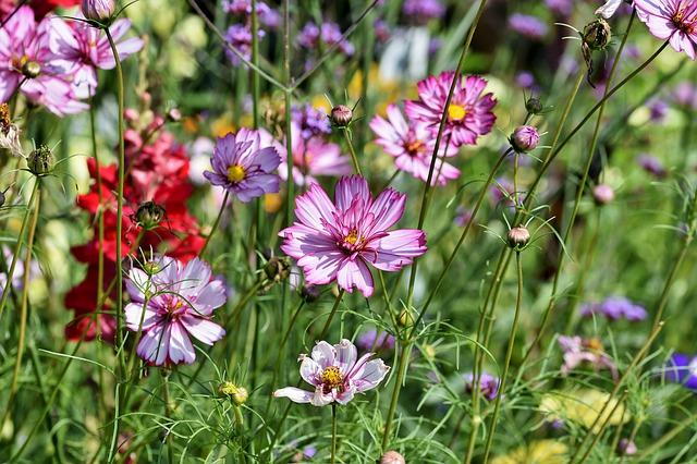 Kwiecisty ogród
