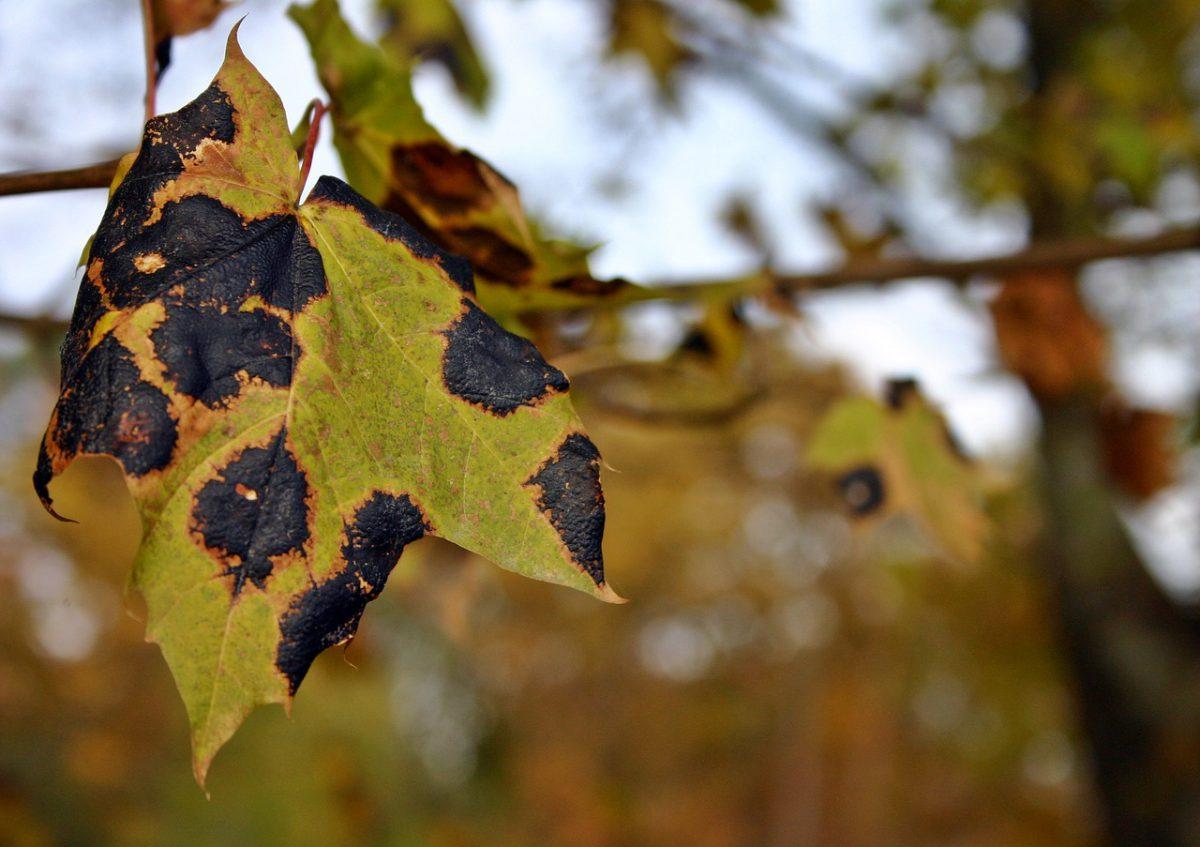 Ridomil Gold – sprawdzony środek ochrony roślin!